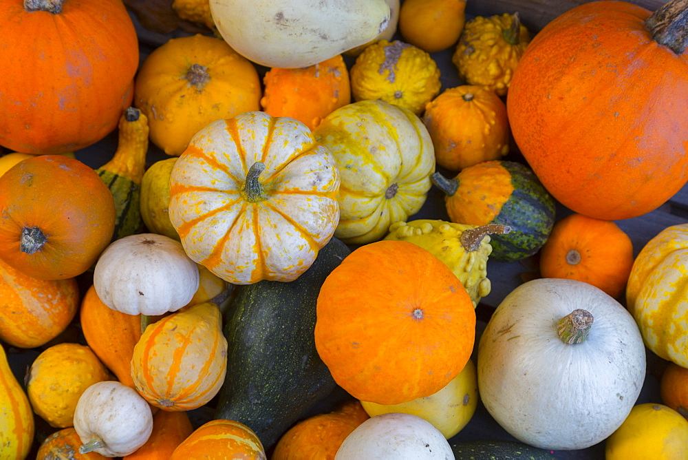 Assorted autumn vegetables, squashes and pumpkins, Derbyshire, England, United Kingdom, Europe