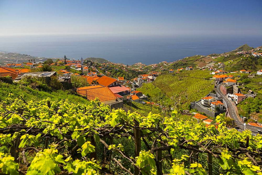 View of vineyard, countryside and Atlantic Ocean near Cabo Girao, Camara de Lobos, Madeira, Portugal, Atlantic, Europe