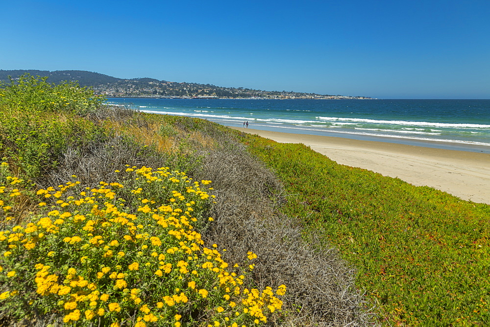 Beach and flora, Monterey Bay, Peninsula, Monterey, Pacific Ocean, California, United States of America, North America