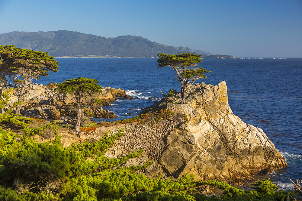 View of Carmel Bay and Lone Cypress at Pebble Beach, 17 Mile Drive, Peninsula, Monterey, California, United States of America, North America