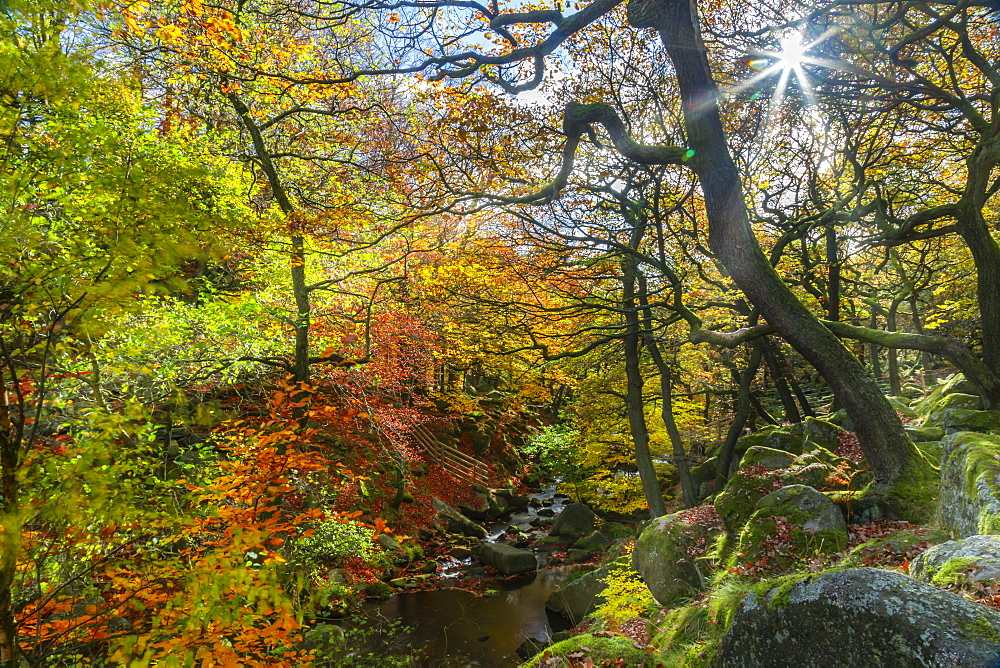 View of Burbage Brook in Padley Gorge during autumn, Derbyshire, Peak District National Park, England, United Kingdom, Europe