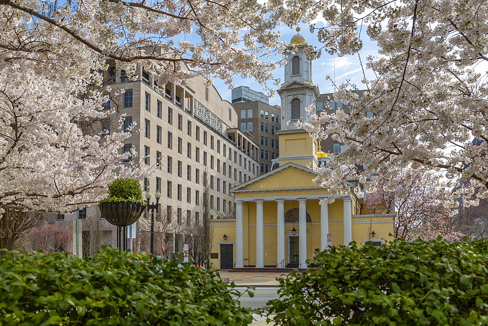 View of the St John's Episcopal Church and spring blossom, Washington D.C., United States of America, North America - 844-19877