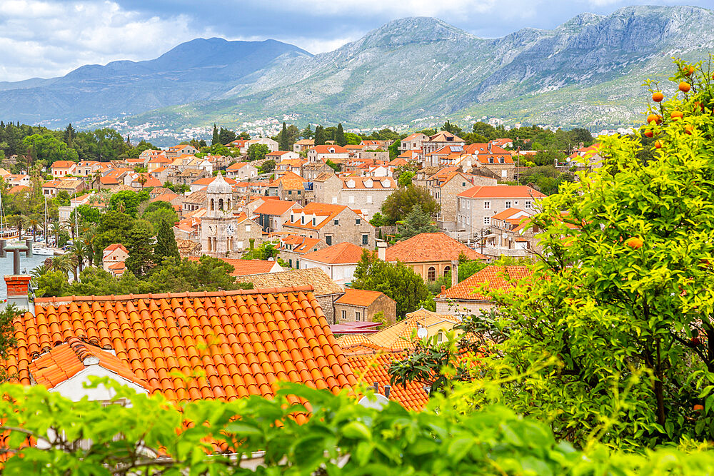 View of town from elevated position, Cavtat on the Adriatic Sea, Cavtat, Dubronick Riviera, Croatia, Europe - 844-20420