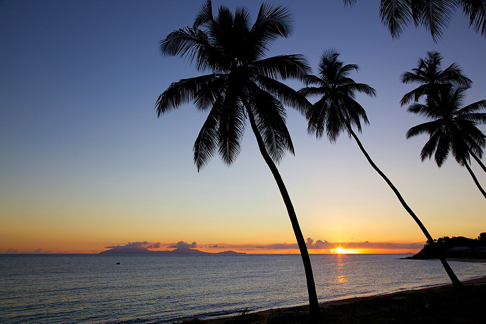 Palm trees and beach at sunset, Morris Bay, St. Mary, Antigua, Leeward Islands, West Indies, Caribbean, Central America
