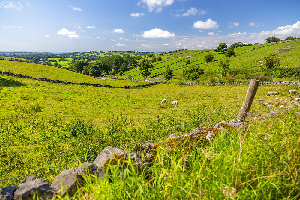 View of dry stone walls and countryside near Brassington, Derbyshire Dales, Derbyshire, England, United Kingdom, Europe