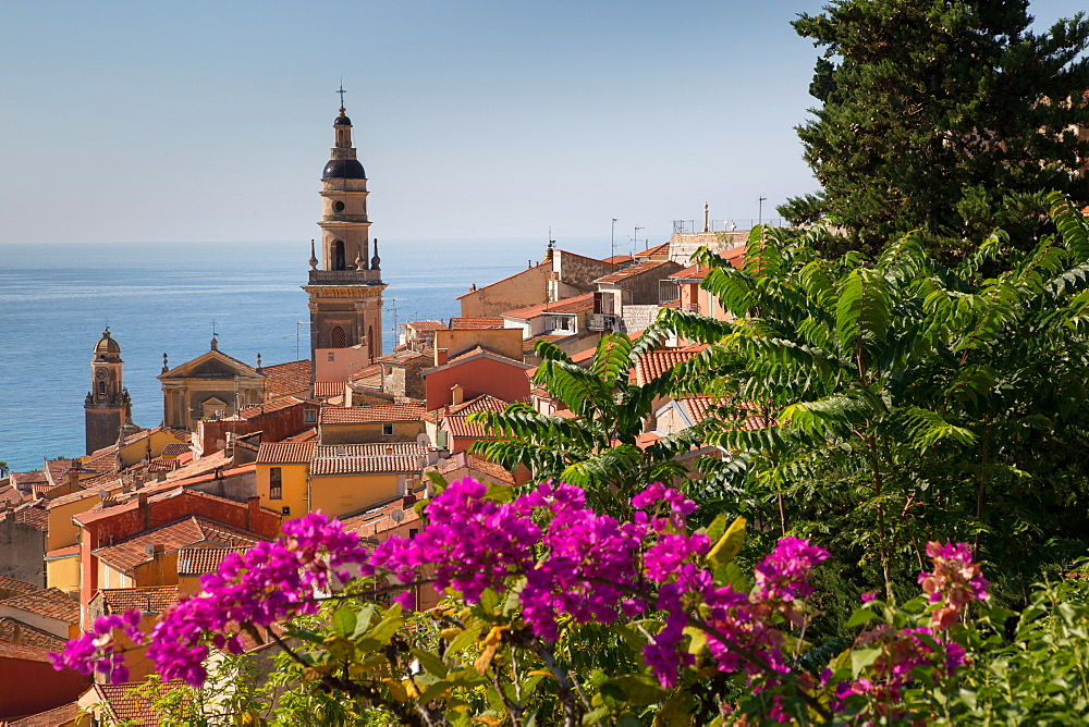 View of medieval Menton and Basilique Saint Michel, Alpes-Maritimes, Cote d'Azur, Provence, French Riviera, France, Mediterranean, Europe