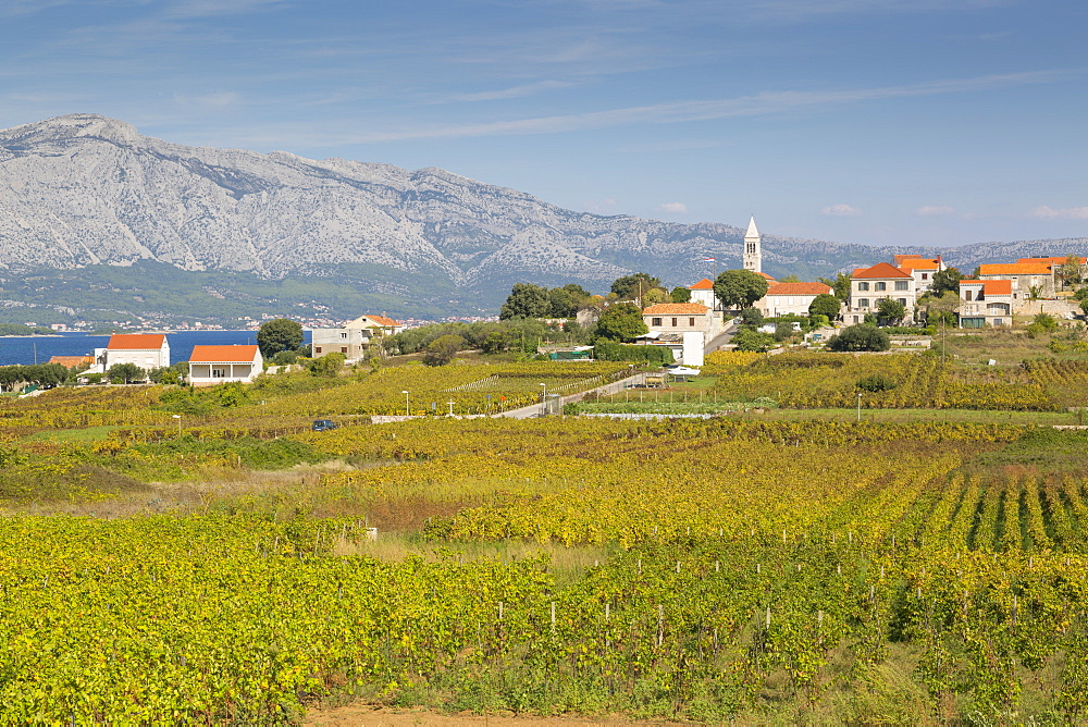 View of town and vineyard, Lumbarda, Korcula, Dubrovnik-Neretva County, Dalmatia, Croatia, Europe