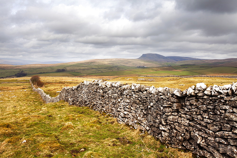 Dry stone wall at Winskill Stones with Pen Y Ghent beyond, near Settle, Yorkshire Dales, Yorkshire, England, United Kingdom, Europe - 845-948