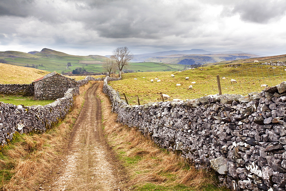 The Pennine Bridle Way near Stainforth in Ribblesdale, Yorkshire Dales, Yorkshire, England, United Kingdom, Europe - 845-951