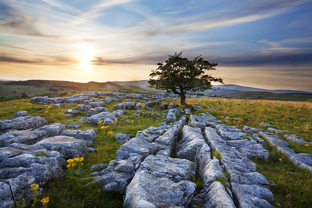 Lone tree and Limestone Pavement at sunset, Settle, Yorkshire, England, United Kingdom, Europe - 845-978