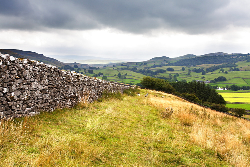 Dry stone wall and Public Footpath in Crummack Dale, Yorkshire, England, United Kingdom, Europe - 845-983