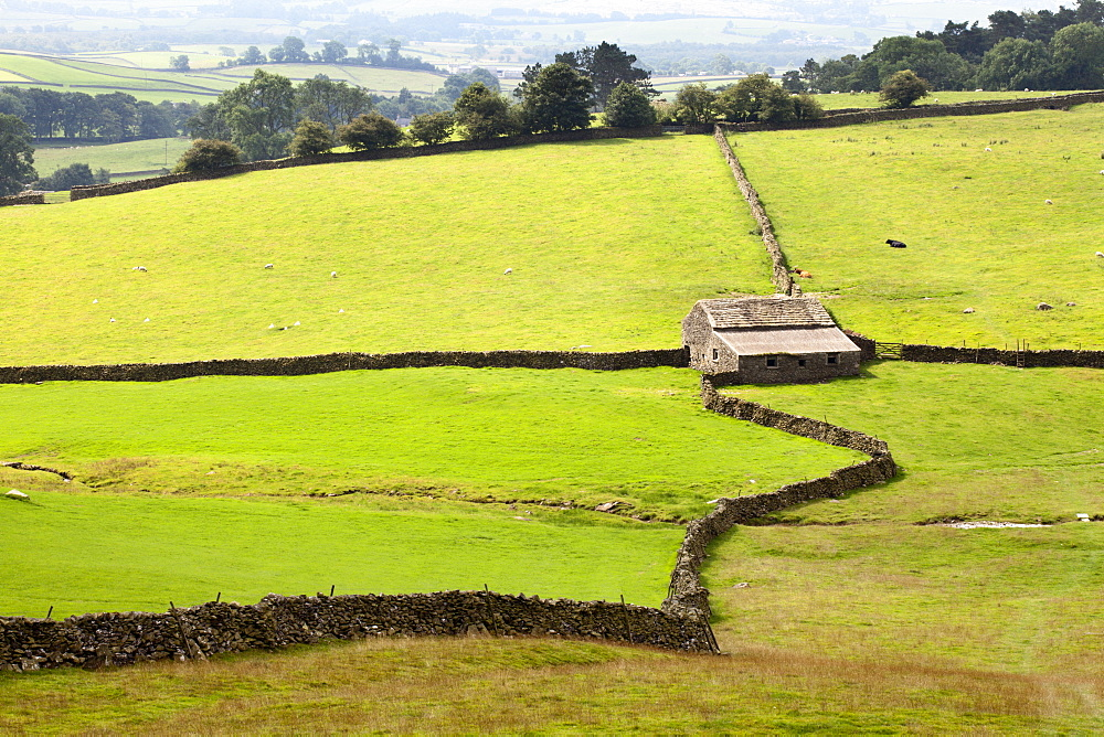 Field Barn and Dry Stone Walls in Crummack Dale, Yorkshire, England, United Kingdom, Europe - 845-985