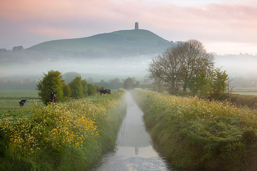 Dawn mist below Glastonbury Tor, Glastonbury, Somerset, England, United Kingdom, Europe