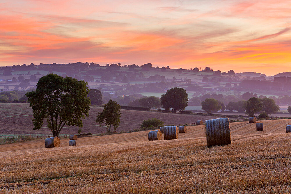 Round hay bales in stubble field at dawn, Chipping Campden, Cotswolds, Gloucestershire, England, United Kingdom, Europe - 846-2720