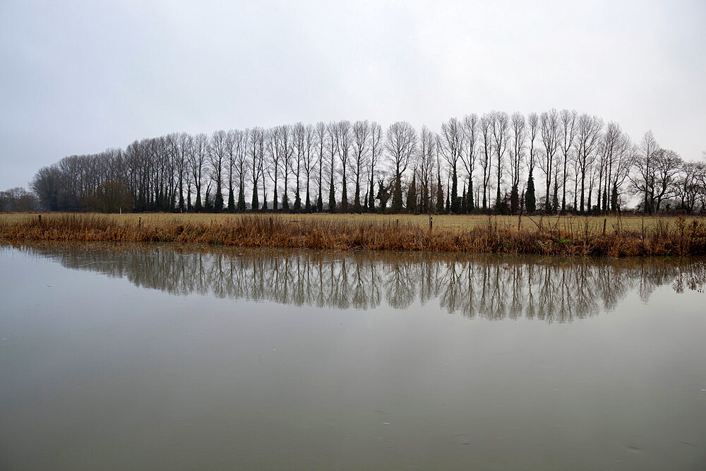 Line of bare trees reflected in River Thames, Lechlade, Cotswolds, Gloucestershire, England, United Kingdom, Europe