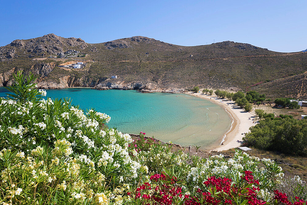 View over Psili Ammos beach with oleander on island's east coast, Serifos, Cyclades, Aegean Sea, Greek Islands, Greece, Europe - 846-2838