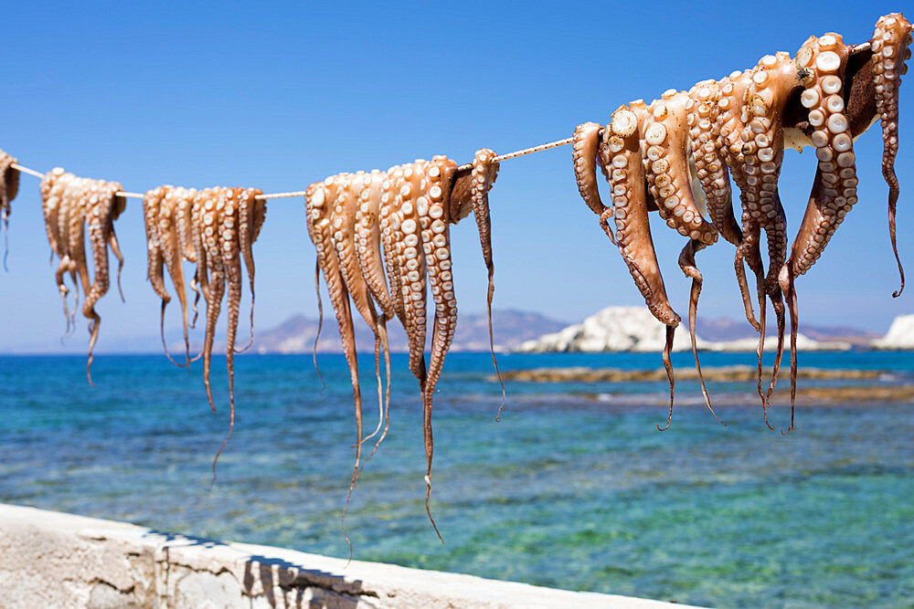 Drying Octopus, Mandrakia, Milos, Cyclades, Aegean Sea, Greek Islands, Greece, Europe - 846-2895