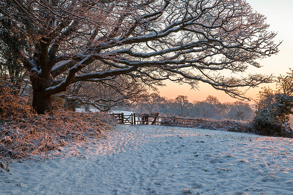 Snow covered High Weald landscape at sunrise, Burwash, East Sussex, England, United Kingdom, Europe - 846-2930