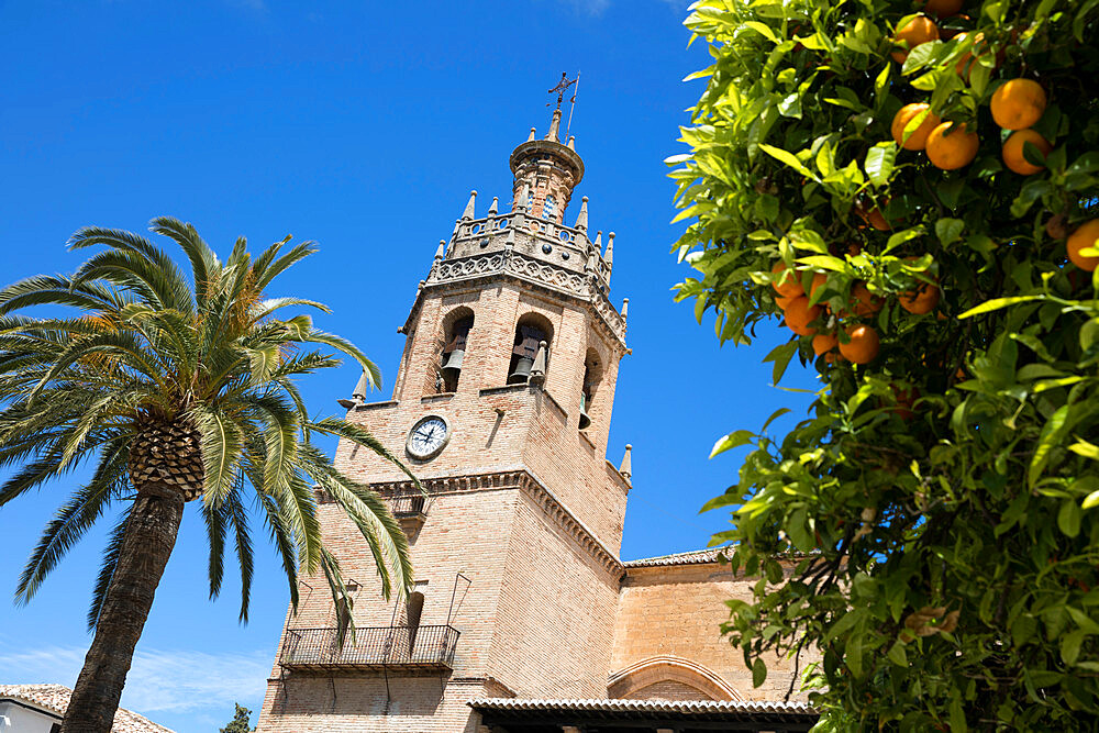 Palm tree and tower of the Iglesia de Santa Maria la Mayor, Ronda, Andalucia, Spain, Europe - 846-2940