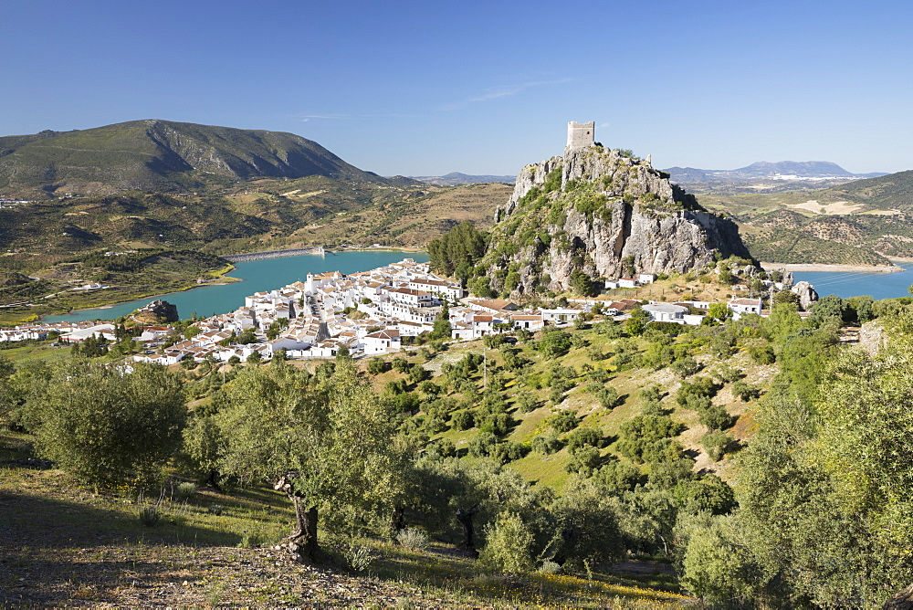 Moorish castle above white village with olive groves, Zahara de la Sierra, Sierra de Grazalema Natural Park, Andalucia, Spain, Europe - 846-2948