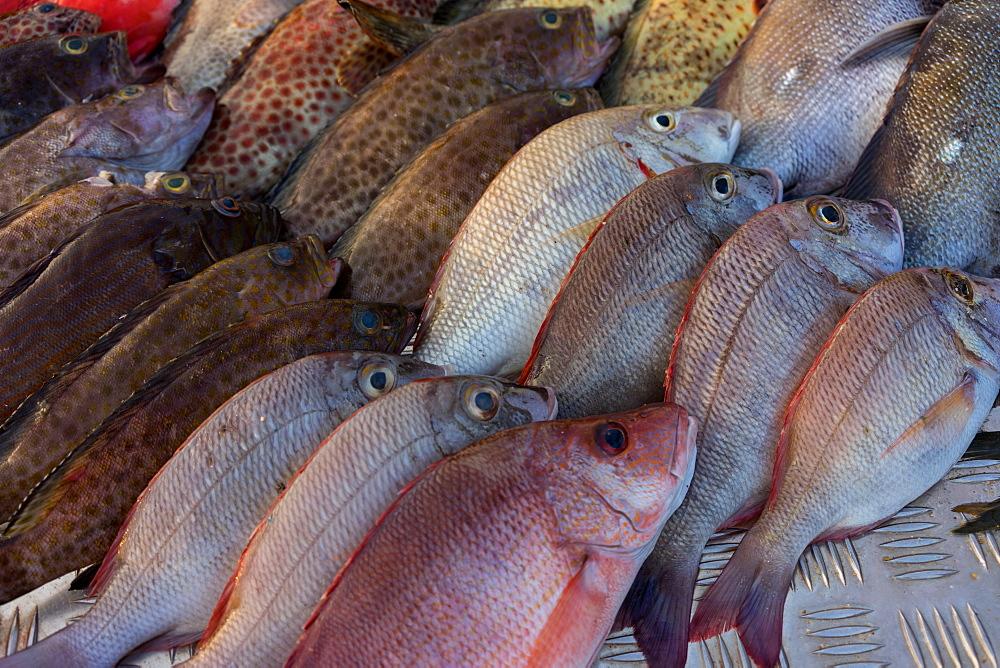 Fresh seafood for sale outside a restaurant on Mirissa Beach, Sri Lanka, Asia - 851-672