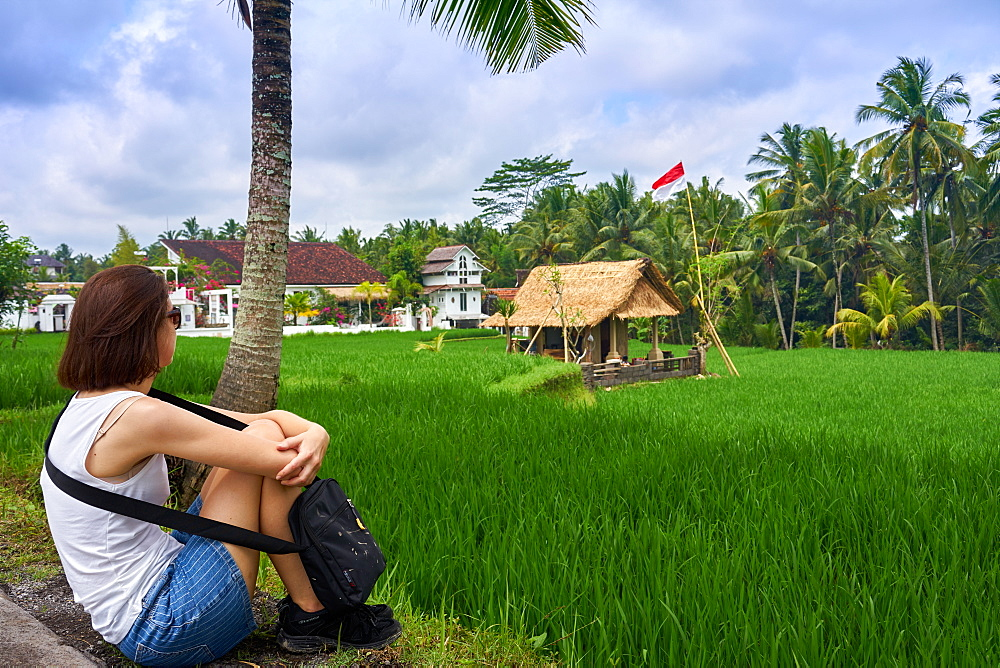 Looking over green rice fields on the Sari Organic Walk in Ubud, Bali, Indonesia, Southeast Asia, Asia