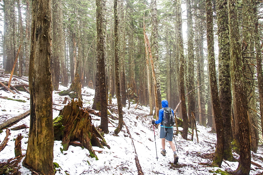 Female Hiker Hiking Through The Forest On A Snow Covered Trail Near Seattle