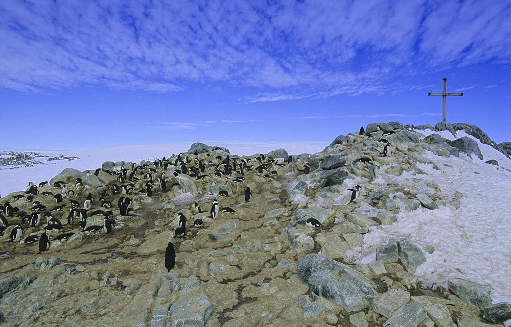 Colony of Adªlie Penguins (Pygoscelis Adeliae) at the Ninnis/Mertz memorial. Commonwealth Bay, East Antarctica - 909-54