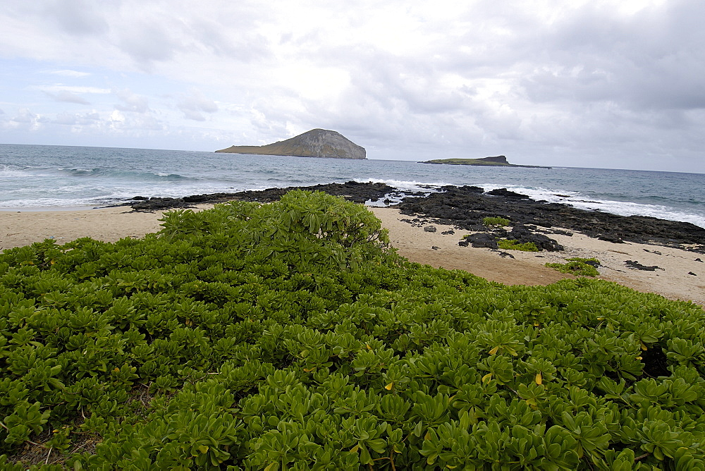 Manana Island (Rabbit Island), Oahu, Hawaii, United States of America, Pacific