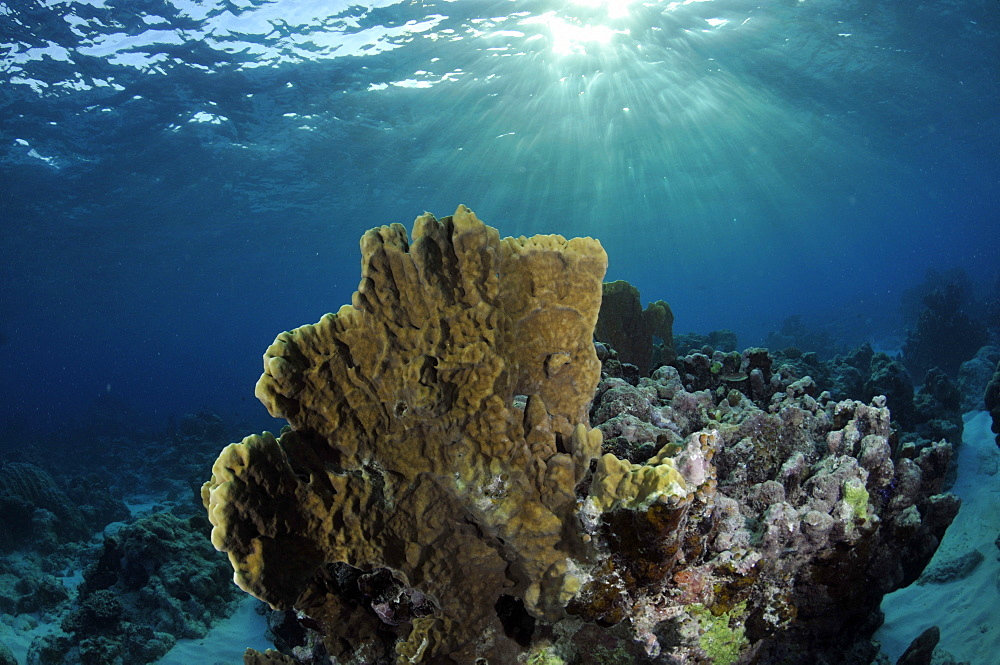 Coral reef and sun rays, Black Coral Island, Kitti Province, Pohnpei, Federated States of Micronesia, Caroline Islands, Micronesia, Pacific Ocean, Pacific