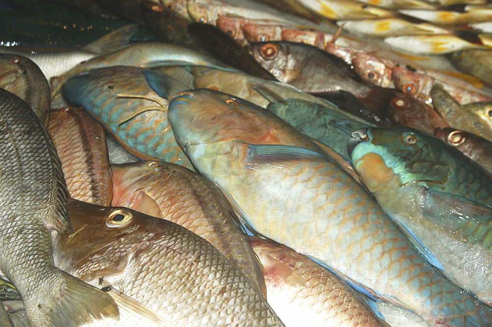 Tropical fish in market for sale, Tahiti, French Polynesia - 970-718