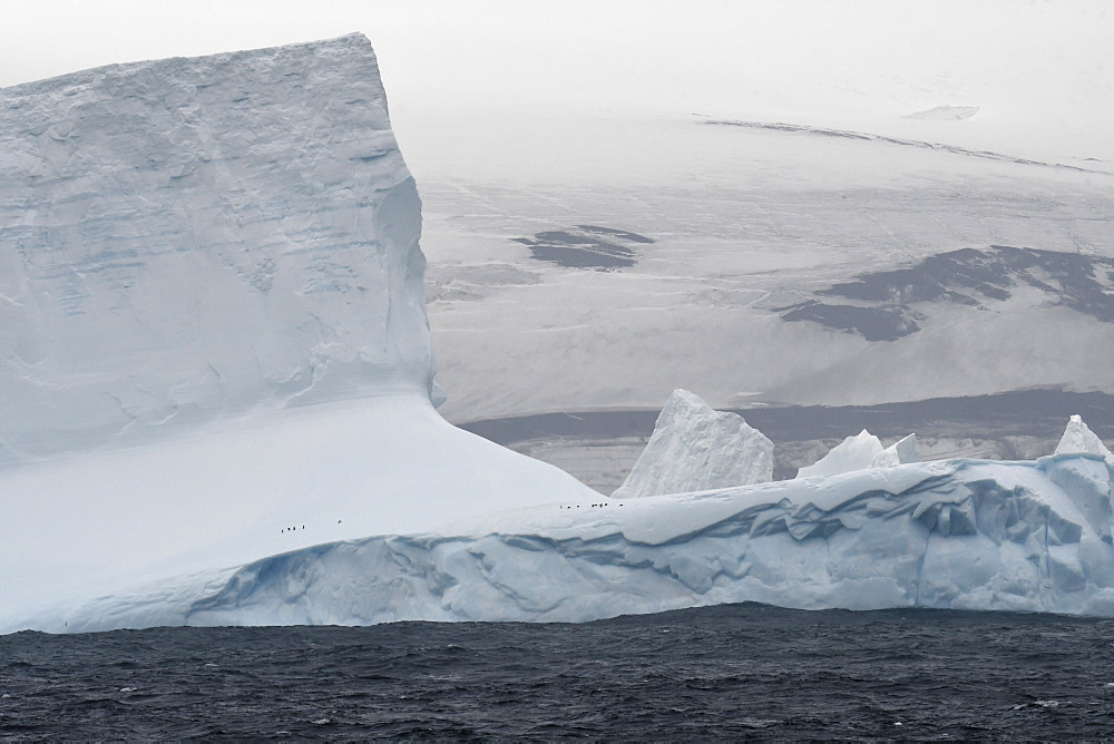 Iceberg with small number of penguins just off the coast of Bristol Island, South Sandwich Islands, Polar Regions