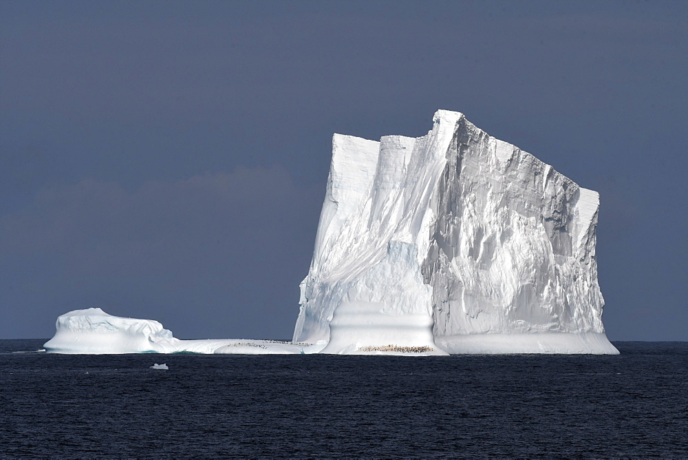 Iceberg with penguins against a blue sky, South Sandwich Islands - 971-173