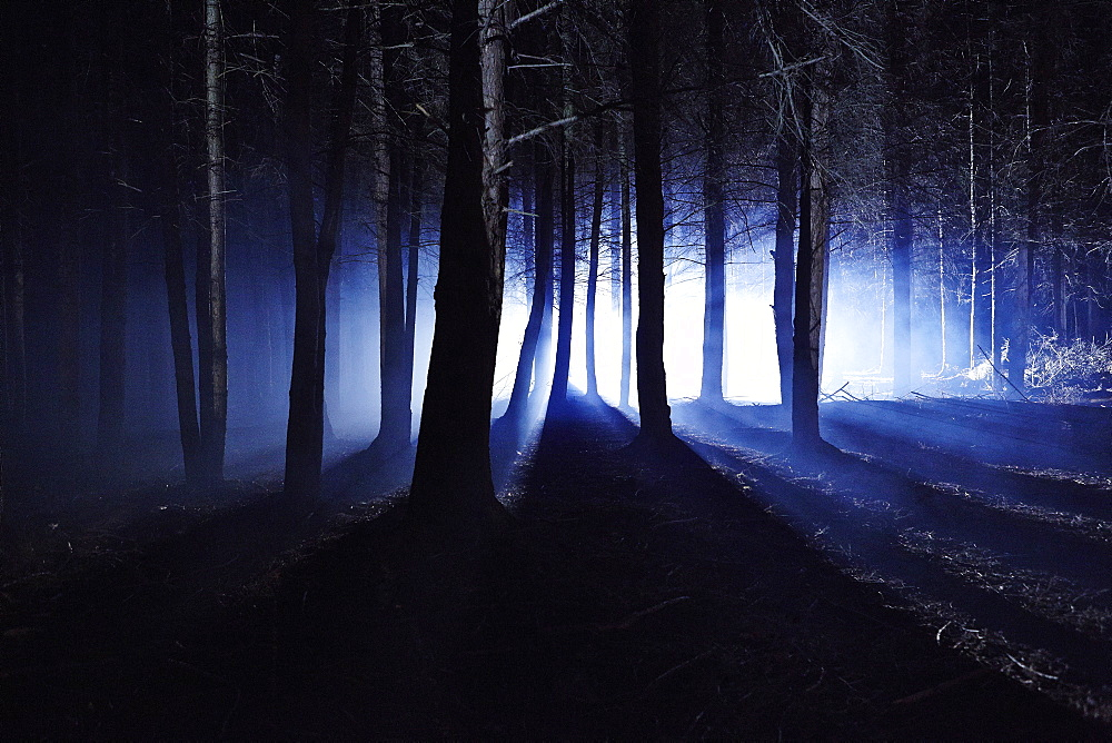 Eerie woods and the English countryside at night, light streaming through trees, England, United Kingdom, Europe - 975-272