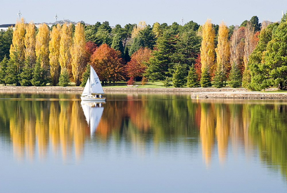 Sailing on Lake Burley Griffin. Poplars, Conifers, Oak trees, Autumn, Cultivated, Canberra, Australian Capital Territory, Australia