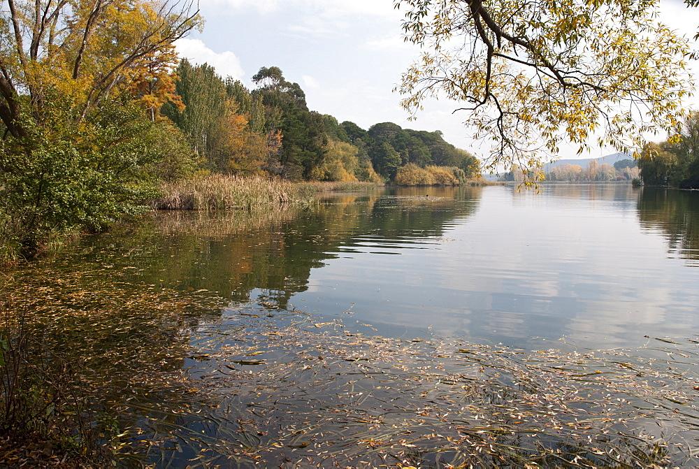 Nursery Bay, Lake Burley Griffin, Autumn, Canberra, Australian Capital Territory, Australia