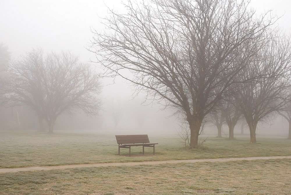 Winter mist in the park, Cultivated, Canberra, Australia
