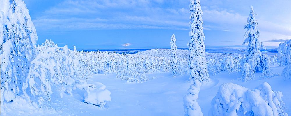 Snow covered winter landscape, Lapland, Pallas-Yllastunturi National Park, Lapland, Finland, Europe