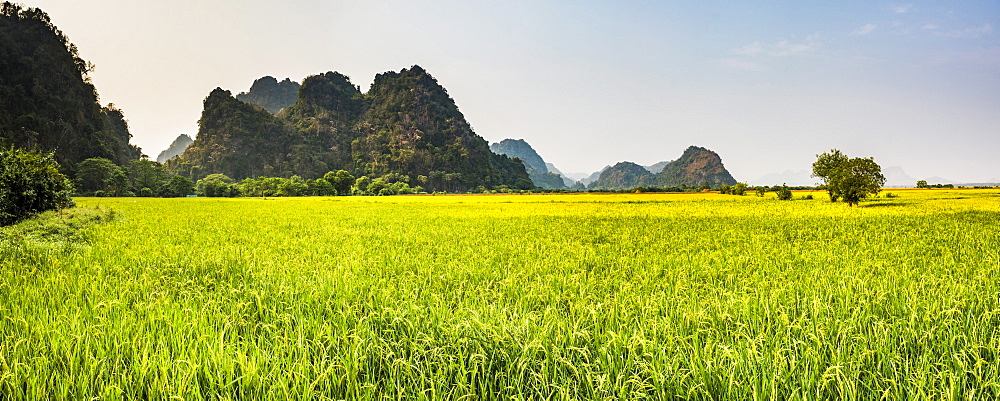 Rice paddy fields at Sadan Cave (aka Saddar Caves), Hpa An, Kayin State (Karen State), Myanmar (Burma) - 1109-3643