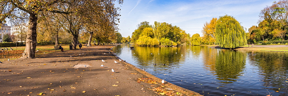 Autumn in Regents Park, one of the Royal Parks of London, England - 1109-3721