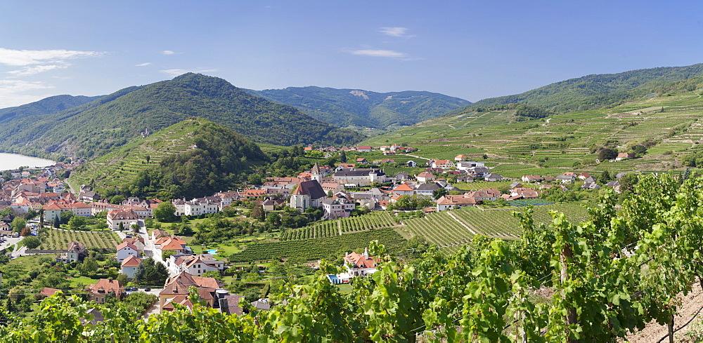 Vineyards in summer, Danube River, Spitz, Cultural Landscape Wachau, UNESCO World Heritage Site, Austria, Europe