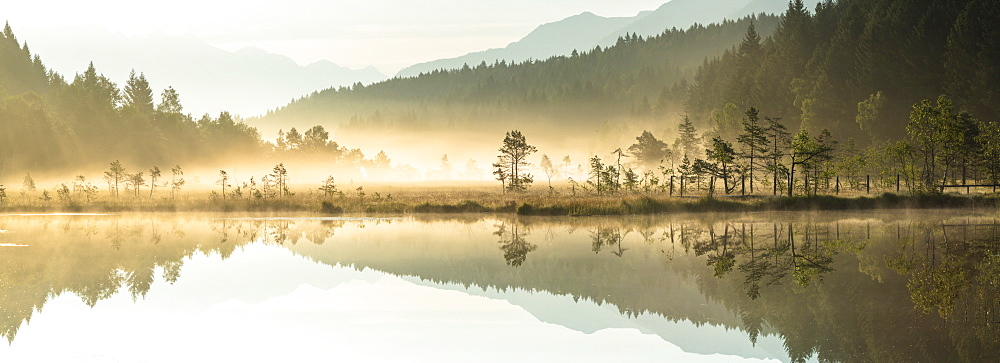 Panoramic of trees mirrored in Pian di Gembro Nature Reserve during a misty sunrise, Aprica, Valtellina, Lombardy, Italy, Europe