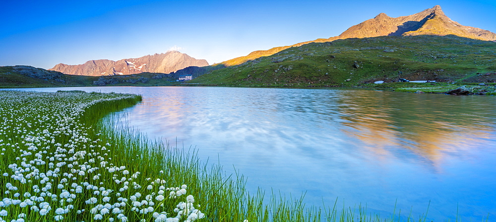 Panoramic of Monte Gavia mirrored in Lago Bianco surrounded by cotton grass, Gavia Pass, Valfurva, Valtellina, Lombardy, Italy, Europe - 1179-4048