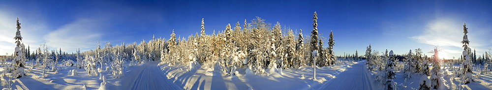 Snow covered trees and track, Kuusamo, Lapland, Finland, Europe