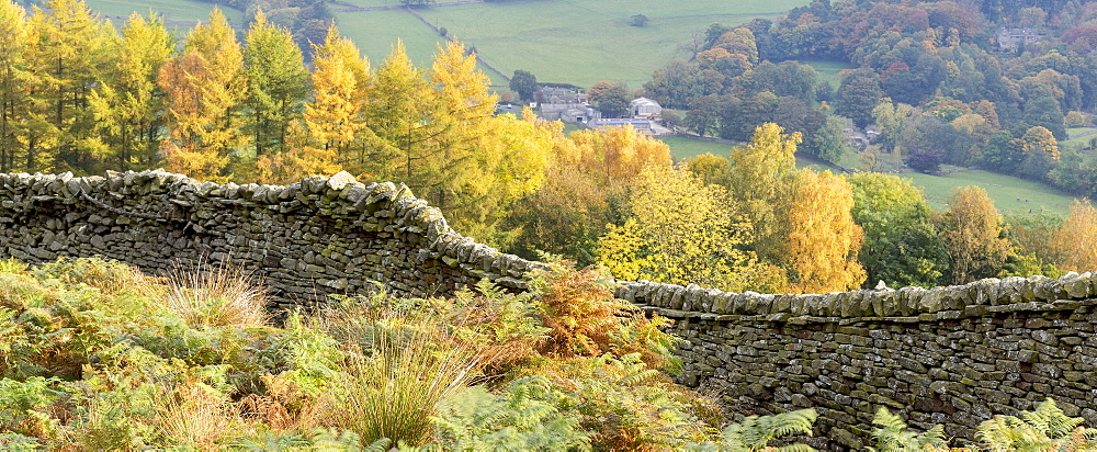 A dry stone wall and autumn colours around Burnsall in Wharfedale, The Yorkshire Dales National Park, Yorkshire, England, United Kingdom, Europe - 1228-156