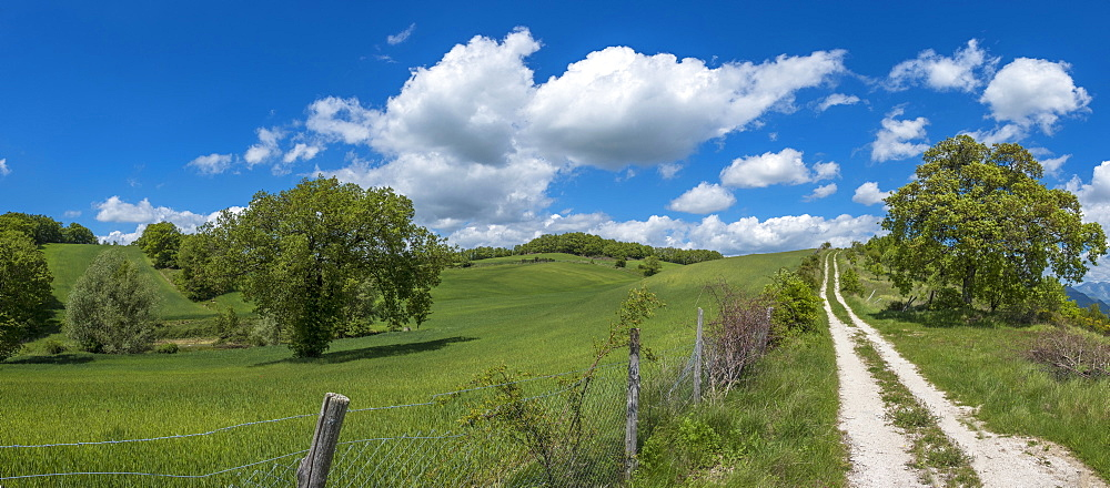 Countryside in spring, Gubbio, Umbria, Italy, Europe - 1264-35