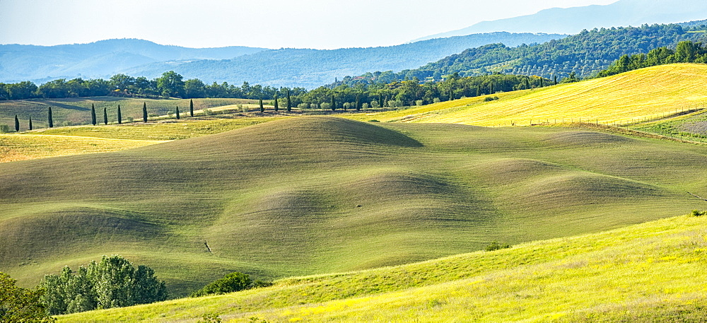 Meadows, Asciano, Val d'Orcia (Orcia Valley), UNESCO World Heritage Site, Tuscany, Italy, Europe - 1264-44