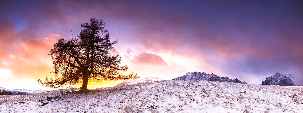 Lonely tree at sunset, Valmasino, Valtellina, Lombardy, Italy, Europe