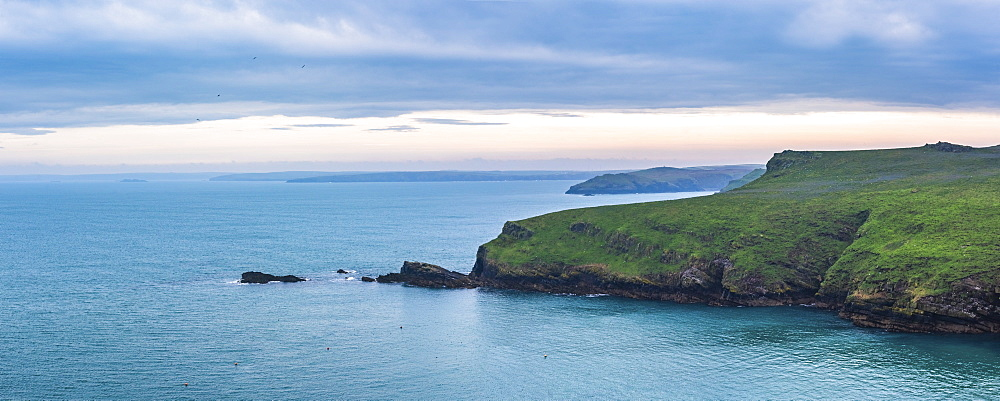North Haven landscape at sunrise, Skomer Island, Pembrokeshire Coast National Park, Wales, United Kingdom, Europe