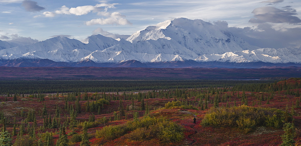 Lone hiker walks into the tundra leading to Mount Denali (Mount McKinley), Alaska, United States of America, North America - 1275-1